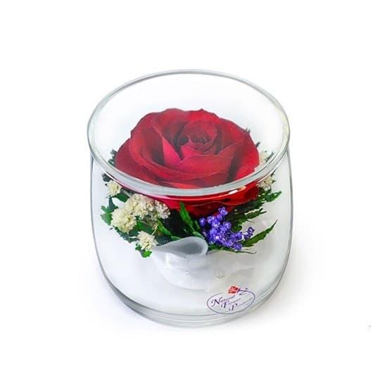 """Красная роза в бокале """"Мини"""" (SSR)"""