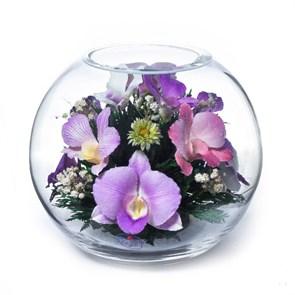 Композиция из орхидей (арт. BNO) в подарочной упаковке