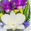 Композиция из натуральных орхидей (арт. RmiO)